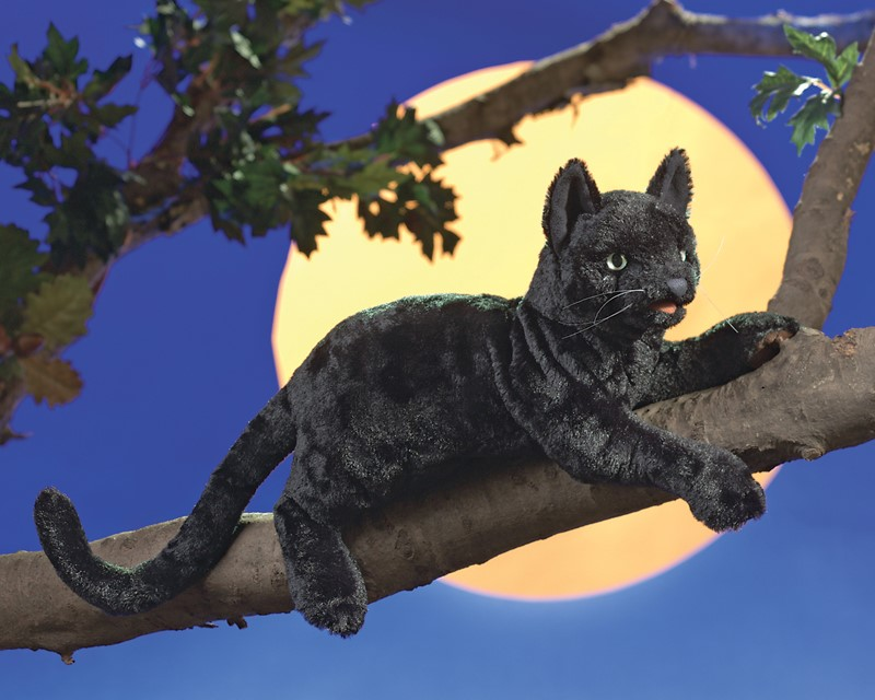 Www.hot černá kočička